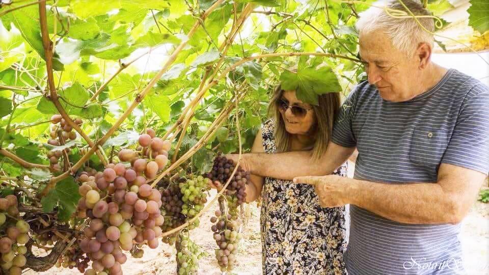 כרם ענבים של משק אורן במושב נתיב הגדוד