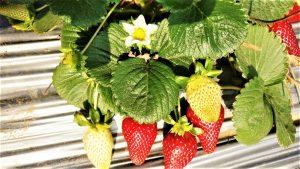 פרחים דבש שמן זית חקלאים טרי מהשדה