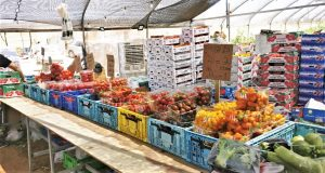 ירק ירקות פירות מכירה ישירה מהשדה לצלחת משק רמי קנטור רמת השרון