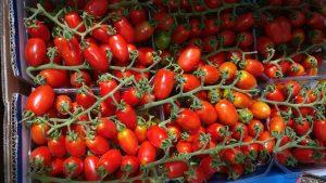 עגבניות שרי מתוקות אלי כהן