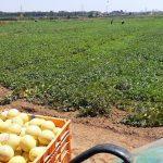 משק רמי קנטור רמת השרון פירות ירקות שוק איכרים