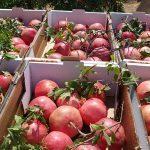 שוק איכרים פירות ירקות רימונים טרי מהשדה מהמטע
