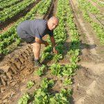 ירקות פירות טרי מהחקלאי מכירה ישירה שוק איכרים