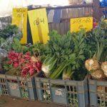 ירק טרי מהשדה לצלחת צנוניות שורשים עלים מכירה ישירה