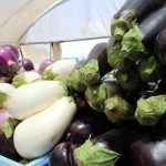 ירקות פירות חסה טרי משדה מכירה ישירה חקלאים שוק איכרים רמת השרון