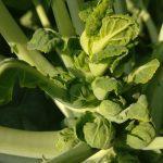 מכירה ישירה שוק איכרים ירקות פירות רמת השרון