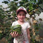 מלפפונים עגבניות חסות חקלאים מכירה ישירה
